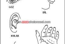 Duyu Organlarımız