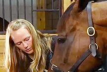 Horse showing / Horse Showing | How to show a horse | Horse showing tips | horse showing help |