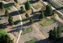 Trillium Projects / WERK | Charles Anderson Landscape Architecture