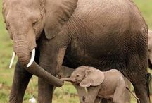 baby animals / for all the cute things in the world!:)