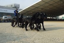 Baroque Horses - Friesians, Andalusians, Lipizzaners