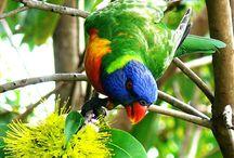 Australian Animals and Plants