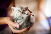 Cats / so lovely
