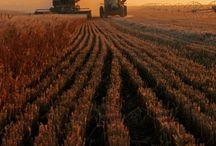 Farming live❤️
