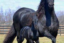 Обнимаются лошади неуклюже..