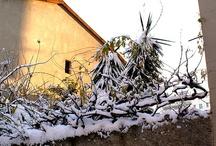 Nevicata su Firenze il giorno dopo