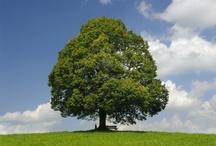 Tree - Pohon