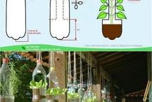 plantas en botellas