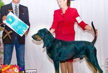 Oak Hill Black and Tan Coonhounds