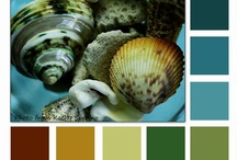 Color Inspiration / by Jamie