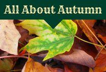 Autumn Decor & Ideas