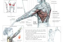 Lift / Instructions and area of muscle