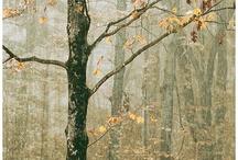 Ormanlar vesonbahar