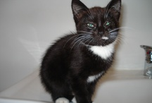 Poppy / Our kitten Poppy - We found her in the garden on 1 Dec 2012, aged about 8 weeks. No-one claimed her, so she stayed!