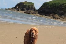 #DOGSONHOLIDAY / Dogs on holiday in Saundersfoot! We are very dog friendly!