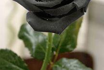 trie rose