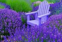 HOME- Garden Bliss / by Alirose Saunders