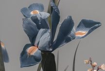 flora n fauna