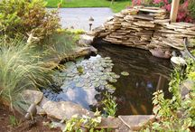 Fish pond ideas / by Fiona Buley