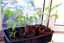 Garten / Garten Tipps  und Tricks  usw