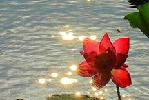 美しい花 3