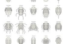 Activities - Trilobiti