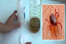 vichos indeseables--------garrapatas y pulgas
