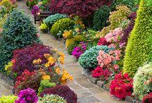 flores guapas