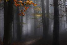 Everyday autumn