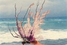 A SHORE THING / by Kara Davis