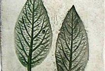 Herbier du maquis / Intervention scolaire