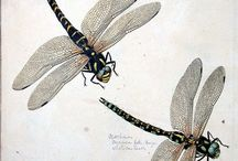 Illustrations / Dragonflies and seaside