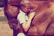 Chevaux-équitation