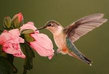 Hummingbirds / by Nancy Lewis Rairdan