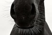Horses ***