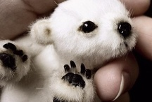 Animalicos  / Love!