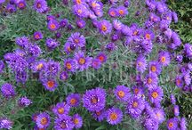 Fleurs plate bande