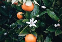 """Orange Blossoms & Neroli Perfume Reviews / """"But Victoria, you already have a board dedicated to white florals! """" I know! But,being that I love orange blossoms and neroli so much, I thought they deserved their own spotlight."""