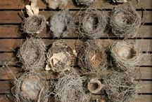 Nests and Nature / by Sally Jones