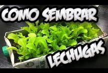 jardin sustentable / Cosechar nuestras propias verduras en espacios reducidos...si es posible.