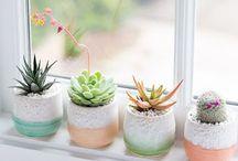 • plants & succulents