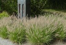 Client: Borbas / Landscape Coach