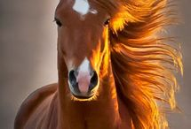 horse one