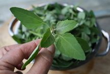 Plantes sauvages officinales et comestibles