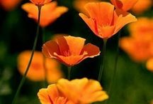fleurs flower virág