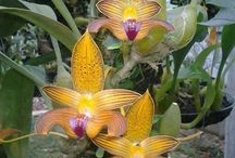 plantas florais