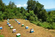 Το μελισσοκομείο μας (Our Apiary) / Ως νομάδες μελισσοκόμοι, μετακινούμαστε ανάλογα με την εποχή, ακολουθώντας τις ανθοφορίες. Αυτά είναι τα μελισσοκομεία μας.
