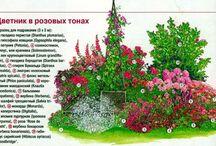 ландшафтный дизайн растения