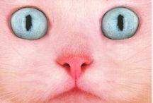 feeling feline / by Go-Go-Girl Johnson