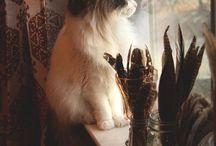 Animal :-)